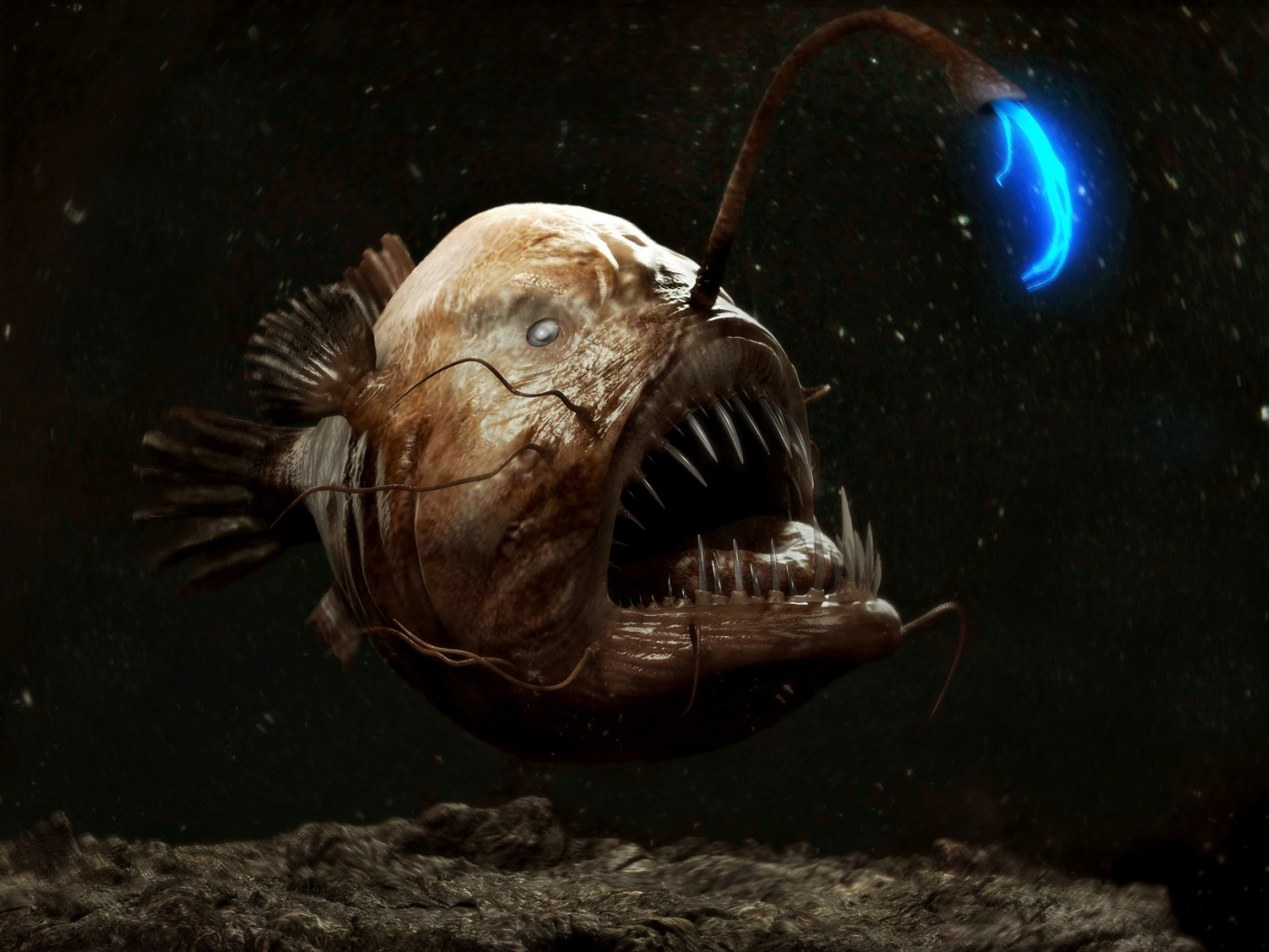 SIX DEEP SEA DWELLERS THAT LOVE TO LIGHT UP | Stories | The Coral ... for Anglerfish Light  104xkb