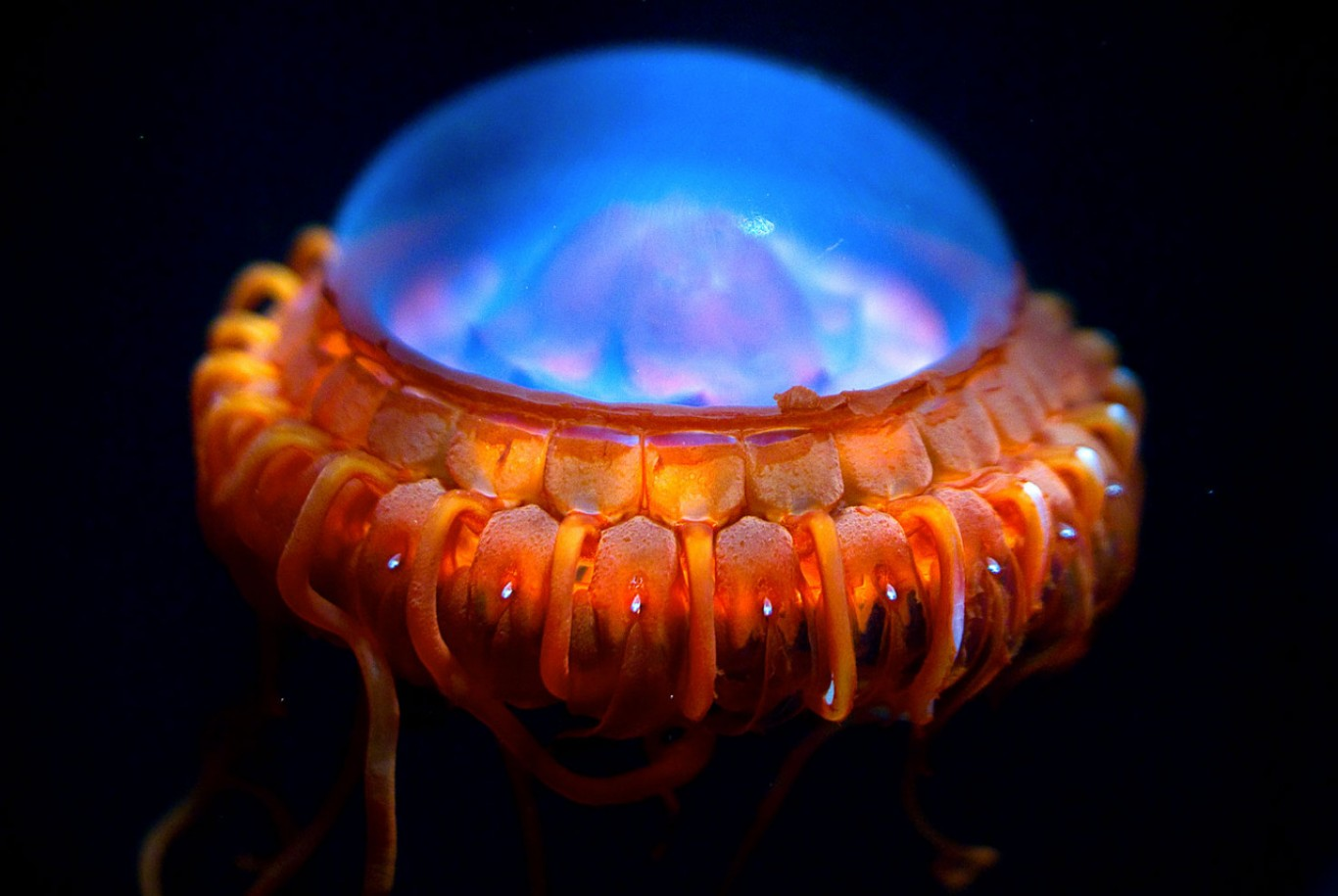 six deep sea dwellers that love to light up | stories | the coral, Reel Combo