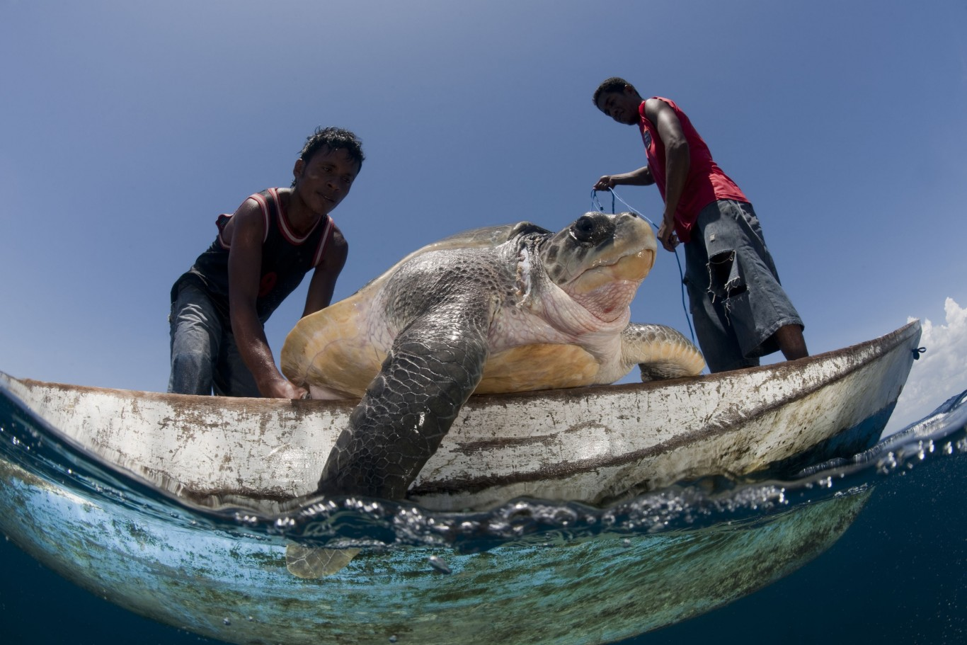 Sea turtles have thrived for 100 million years but will for Freund s fish