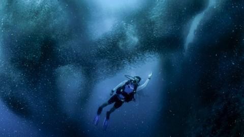 Heike Vester - Marine Mammals And Fish Of Lofoten And Vesterålen