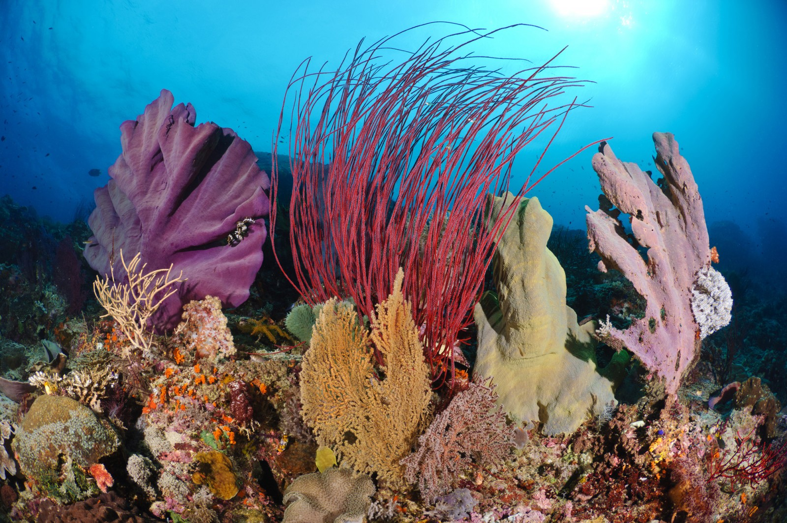 1the-reefs-of-raja-ampat-are-some-of-the-most-diverse-and-healthiest-in-the-world1.jpg