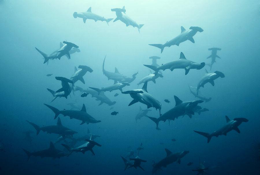 amazing-underwater-sharks.jpg