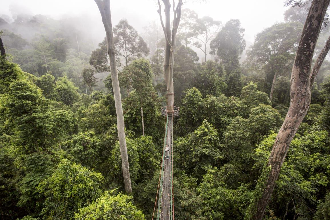 the 400 million year old Danum Valley rainforest