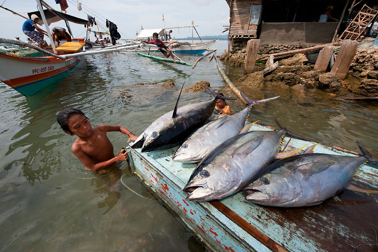a boy lands a boat's tuna catch