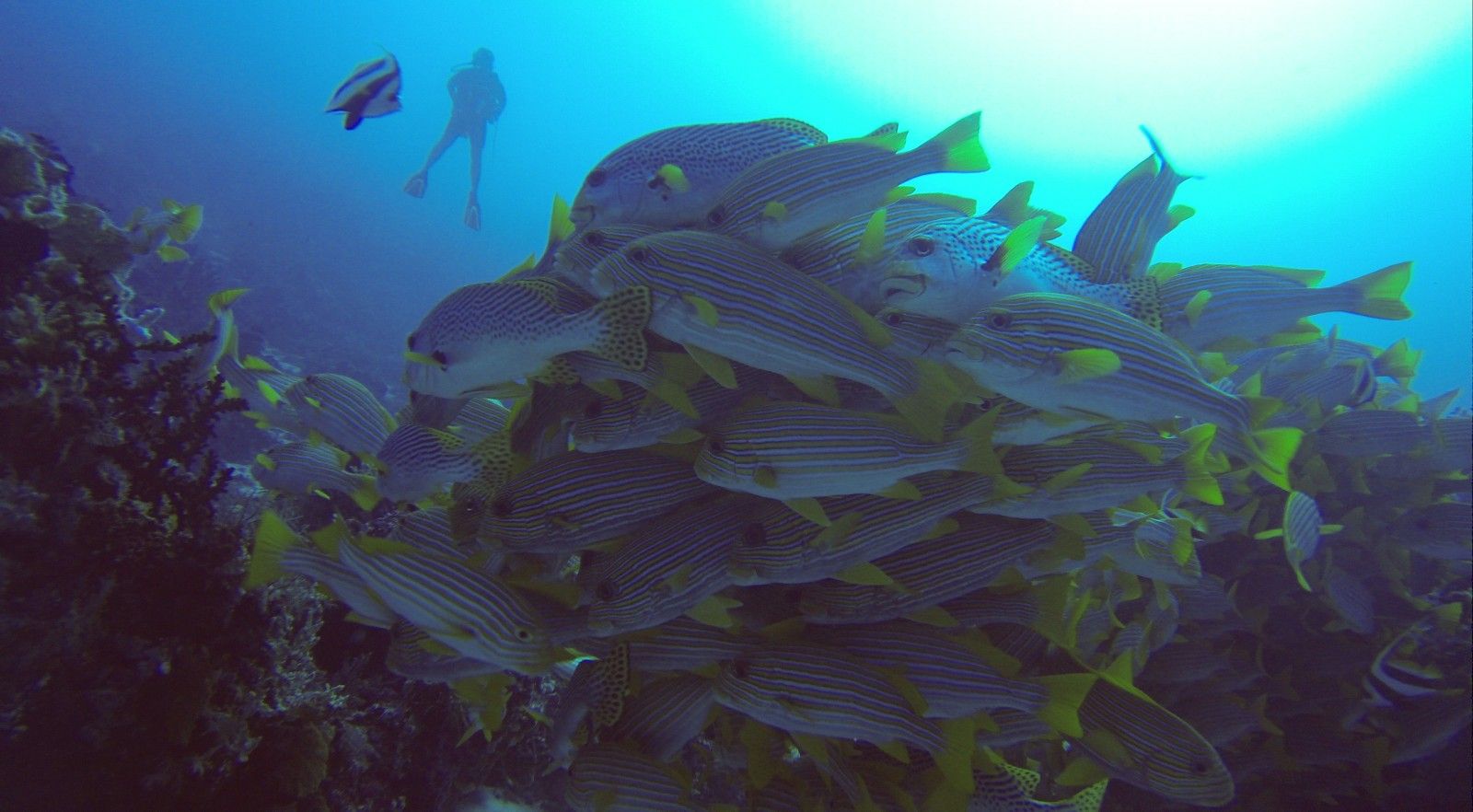 cape_kri_papua_diving