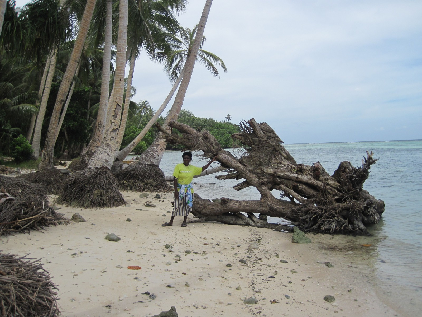 Tree roots are exposed as the beach is increasingly eroded