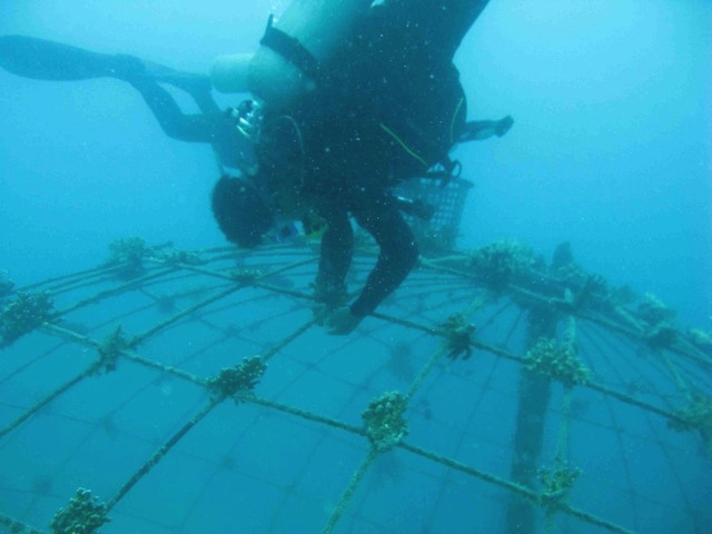 dive-2-2-divers-working-reinforcing-corals.jpg
