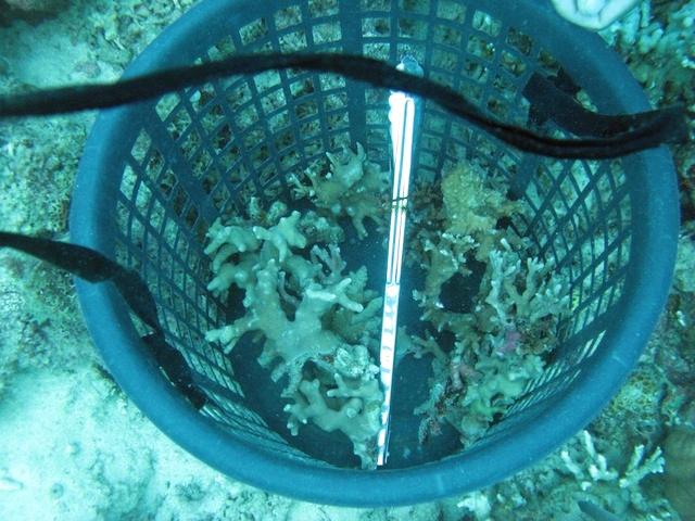 dive-2-coral-basket.jpg