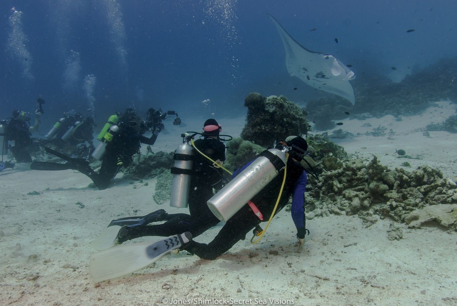 divers-behind-barrier-to-allow-manta-access-to-cleaning-station-1.jpg