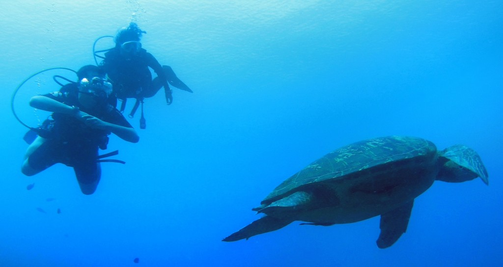 divers-with-turtle-1024x545-.jpg