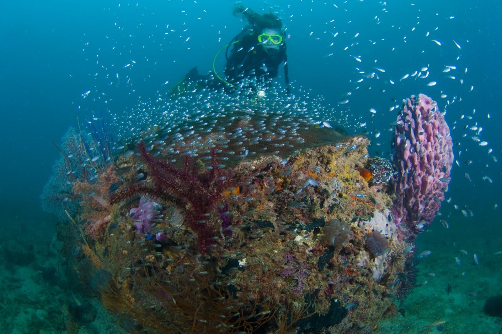 diving-at-tunku-abdul-rahman-marine-park-jpg.jpg