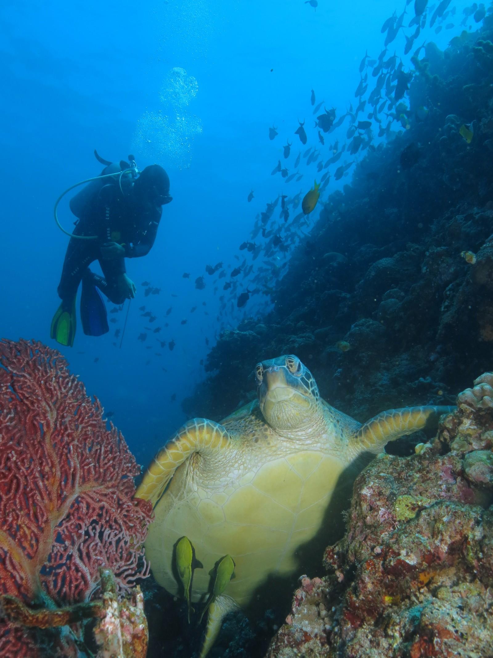 diving-in-manado-island.jpg