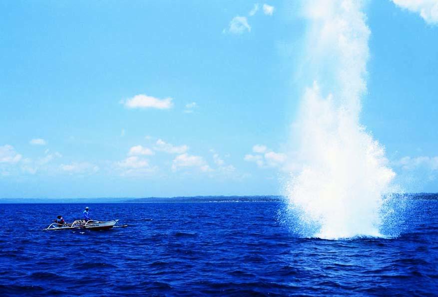 dynamite-fishing-jurgen-freund-wwf-philippines.jpg