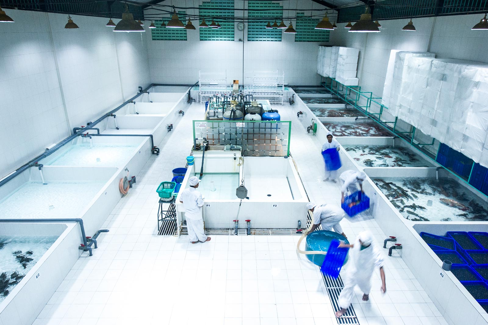 grouper_holding_facility_in_Bali