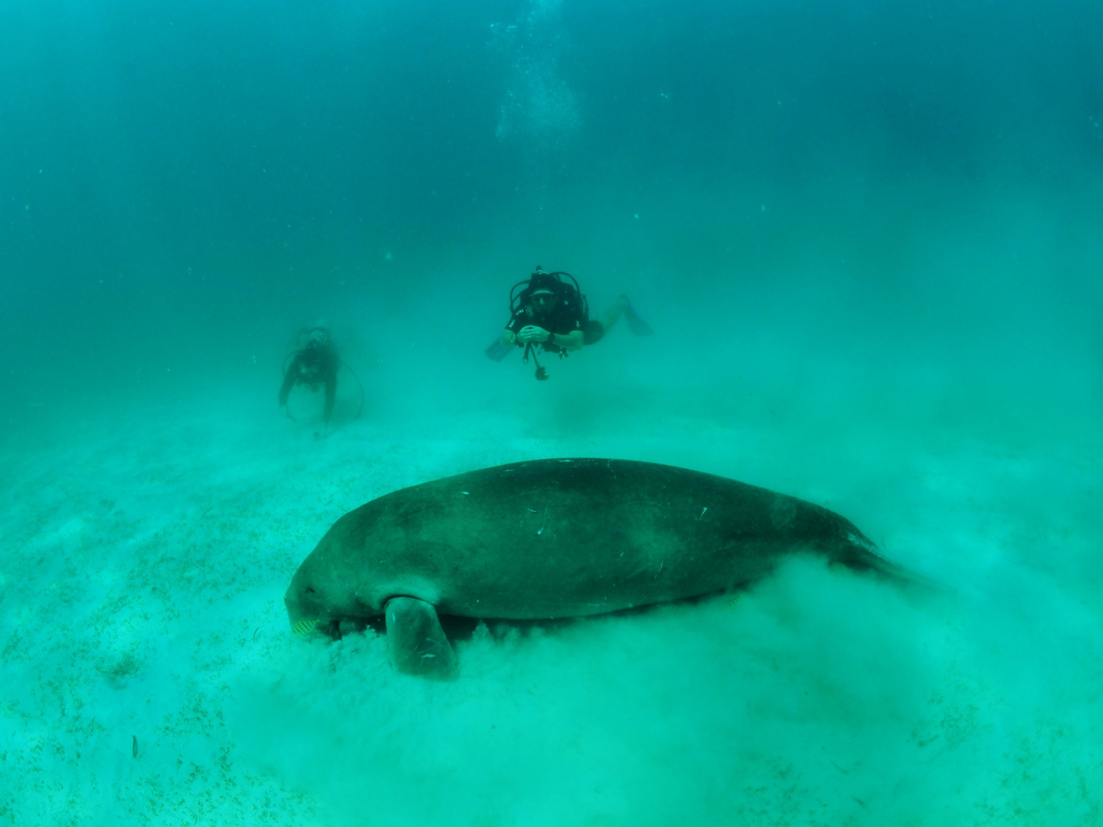 here-be-dugongs-by-danny-ocampo-secondary.jpg