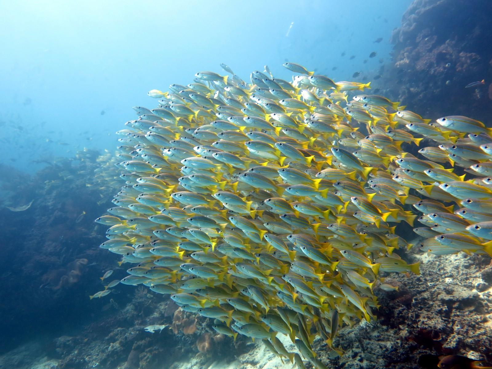 Dampier Strait reef fish