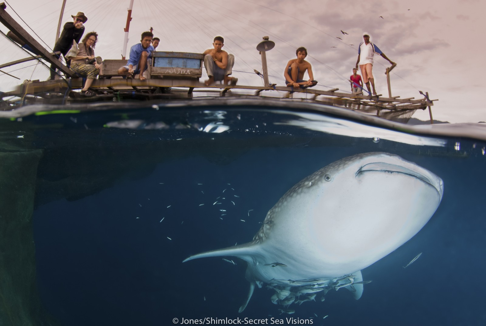 tourists on a bagan fishing platform watch a whale shark