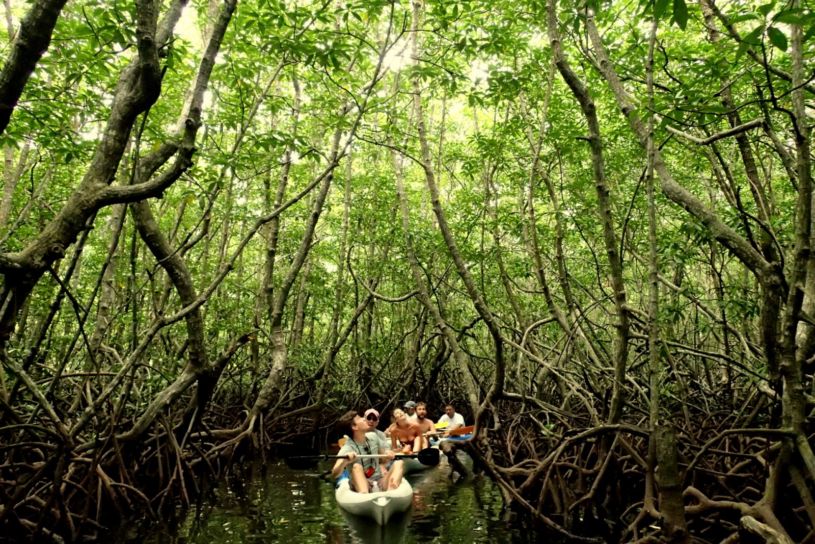 mangrove-kayaking.jpg