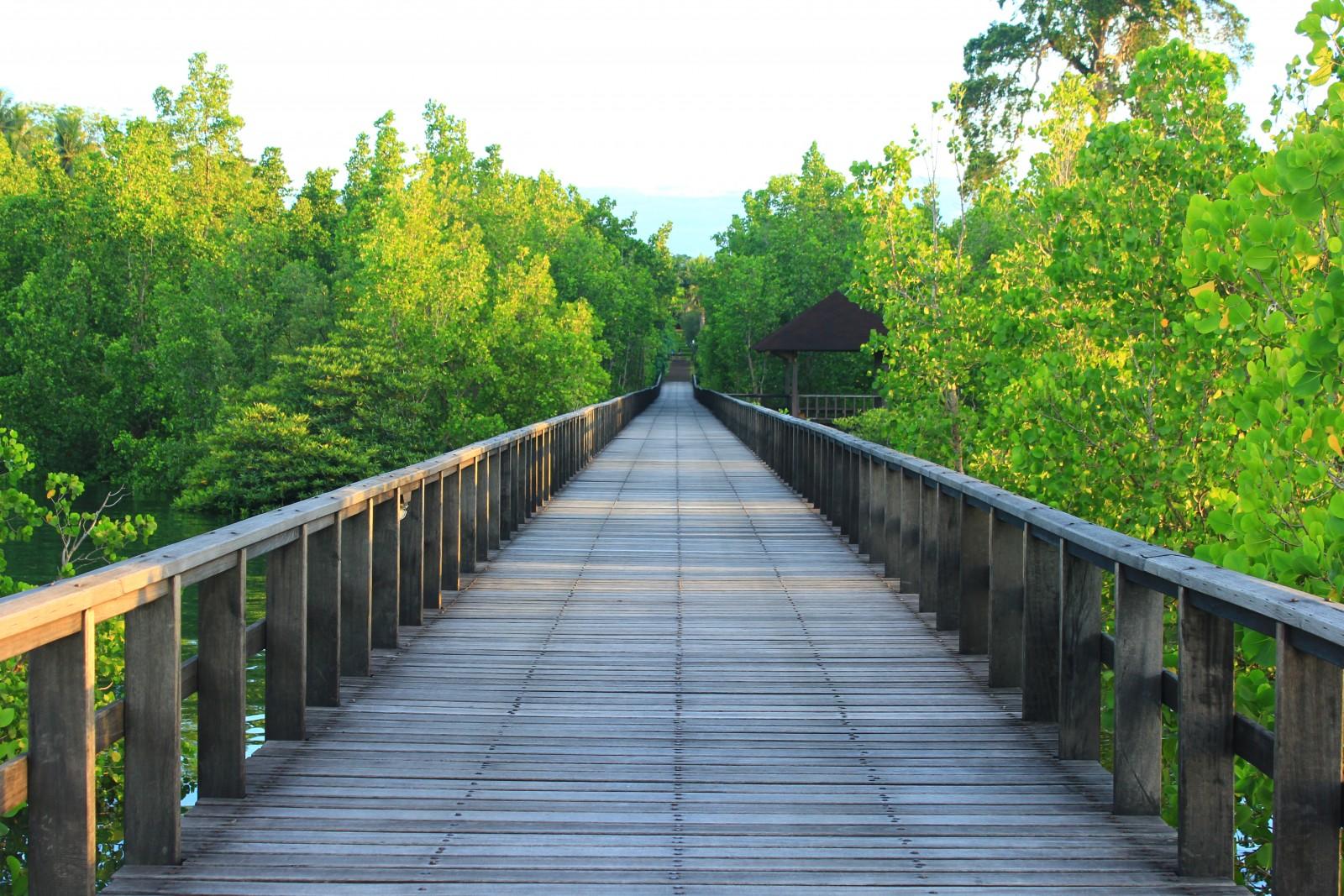mangrove-pathway.jpg