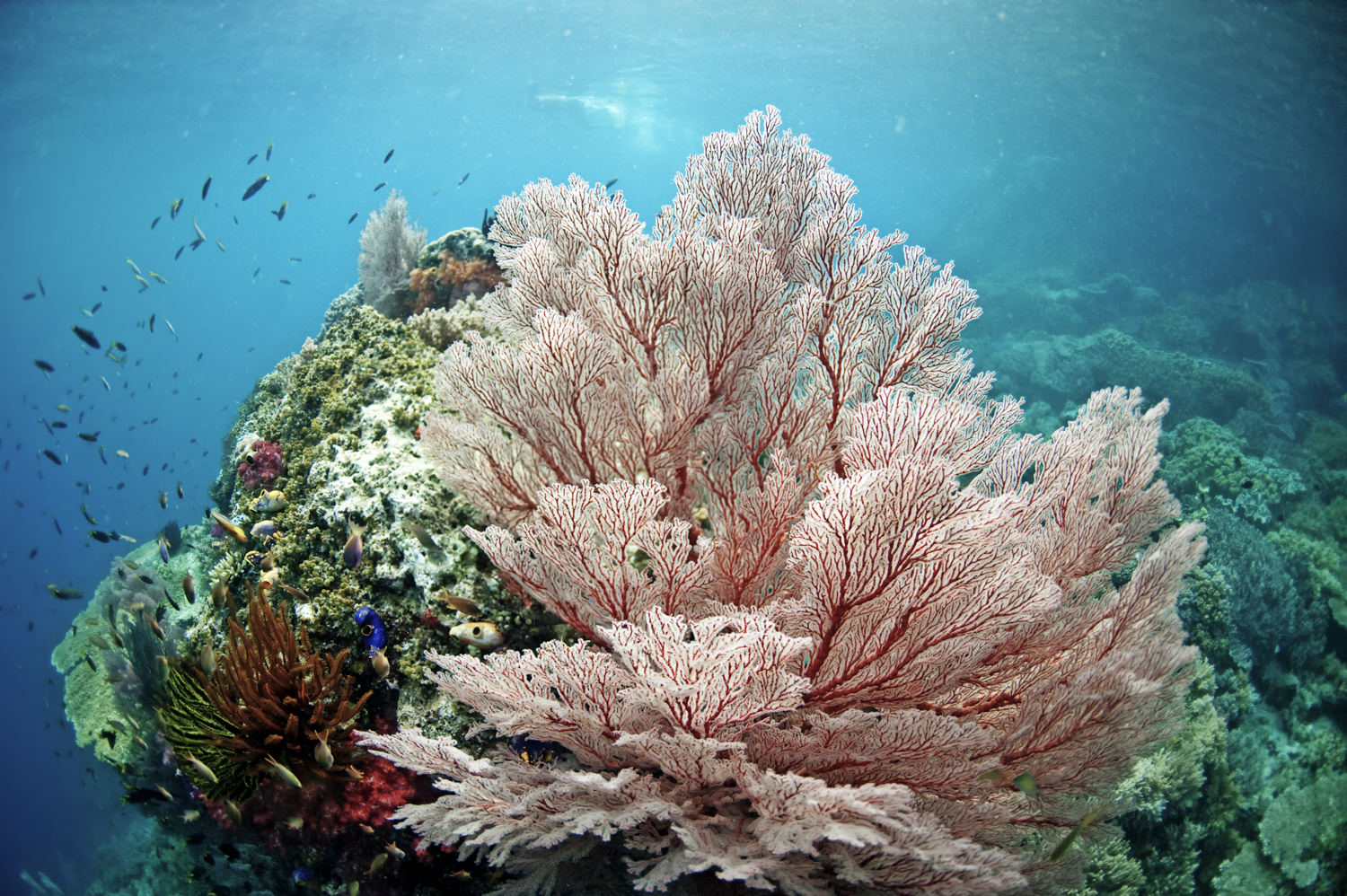 coral bommy in Misool, Raja Ampat.