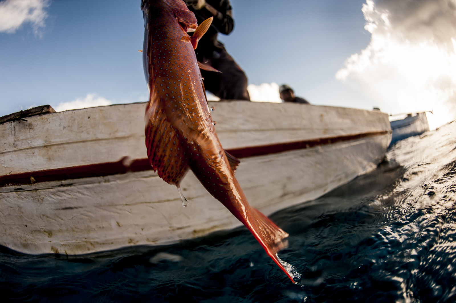 An artisanal fisher catches a grouper.