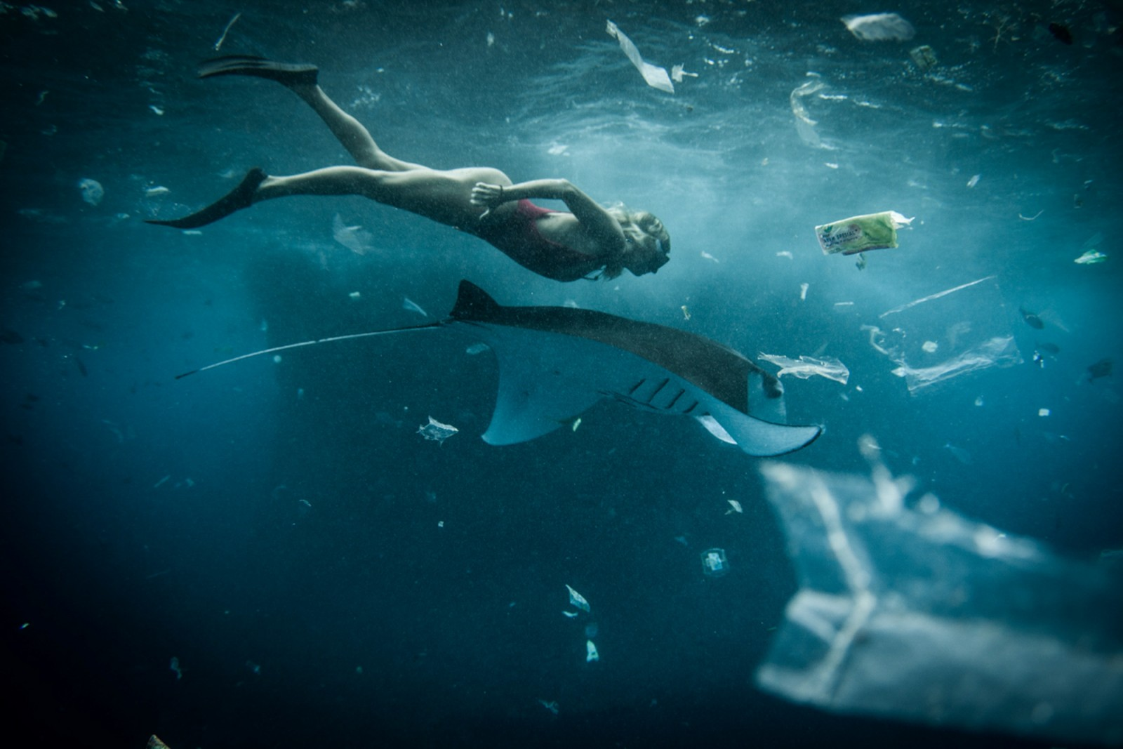 A snorkeler swims with a manta ray in an ocean of trash
