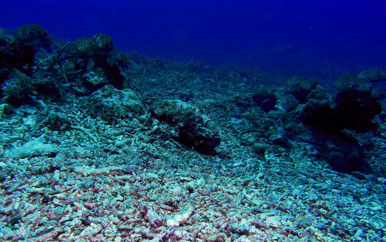 reef-coral-rubble-wwf-philippines.jpg