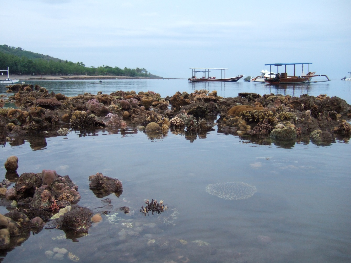 reef-seen-low-tide.jpg