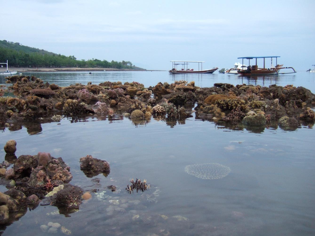 reef-seen-low-tide.jpg