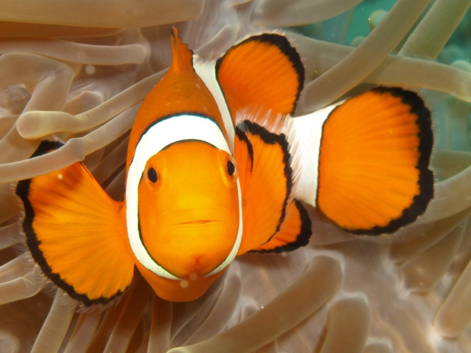 reef-seen-nemo.jpg