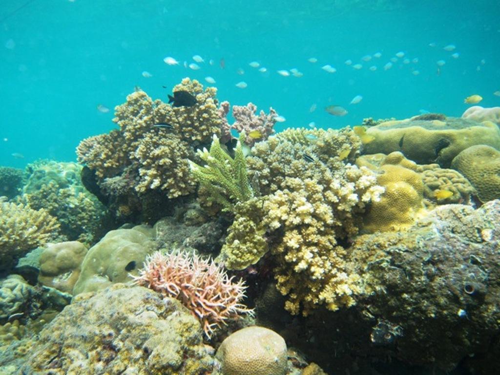 reef-seen-reef.jpg
