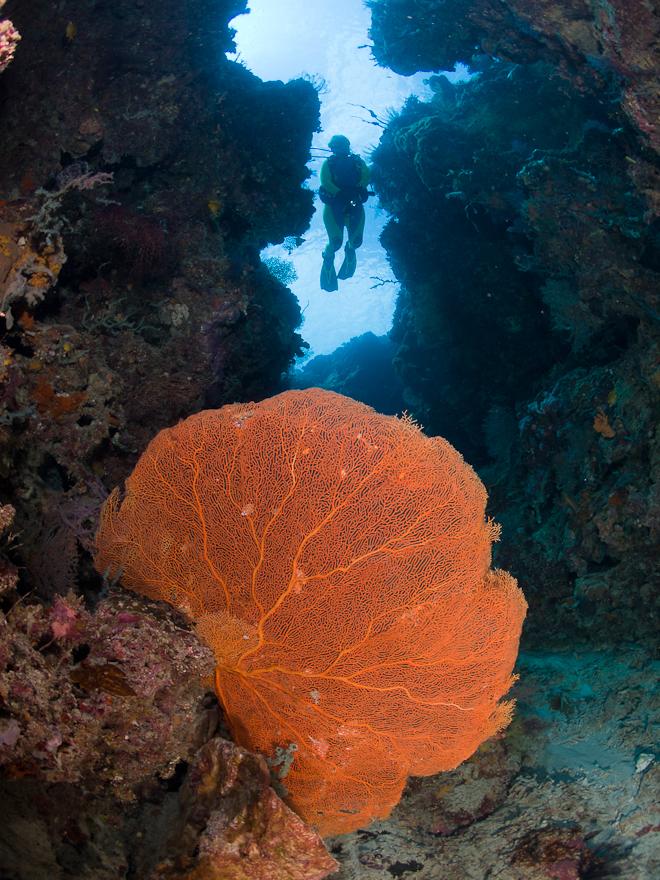 reef-seen-sea-fan.jpg