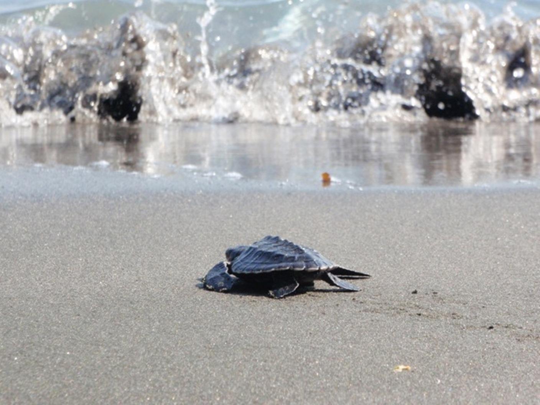 reef-seen-turtle-relaase.jpg