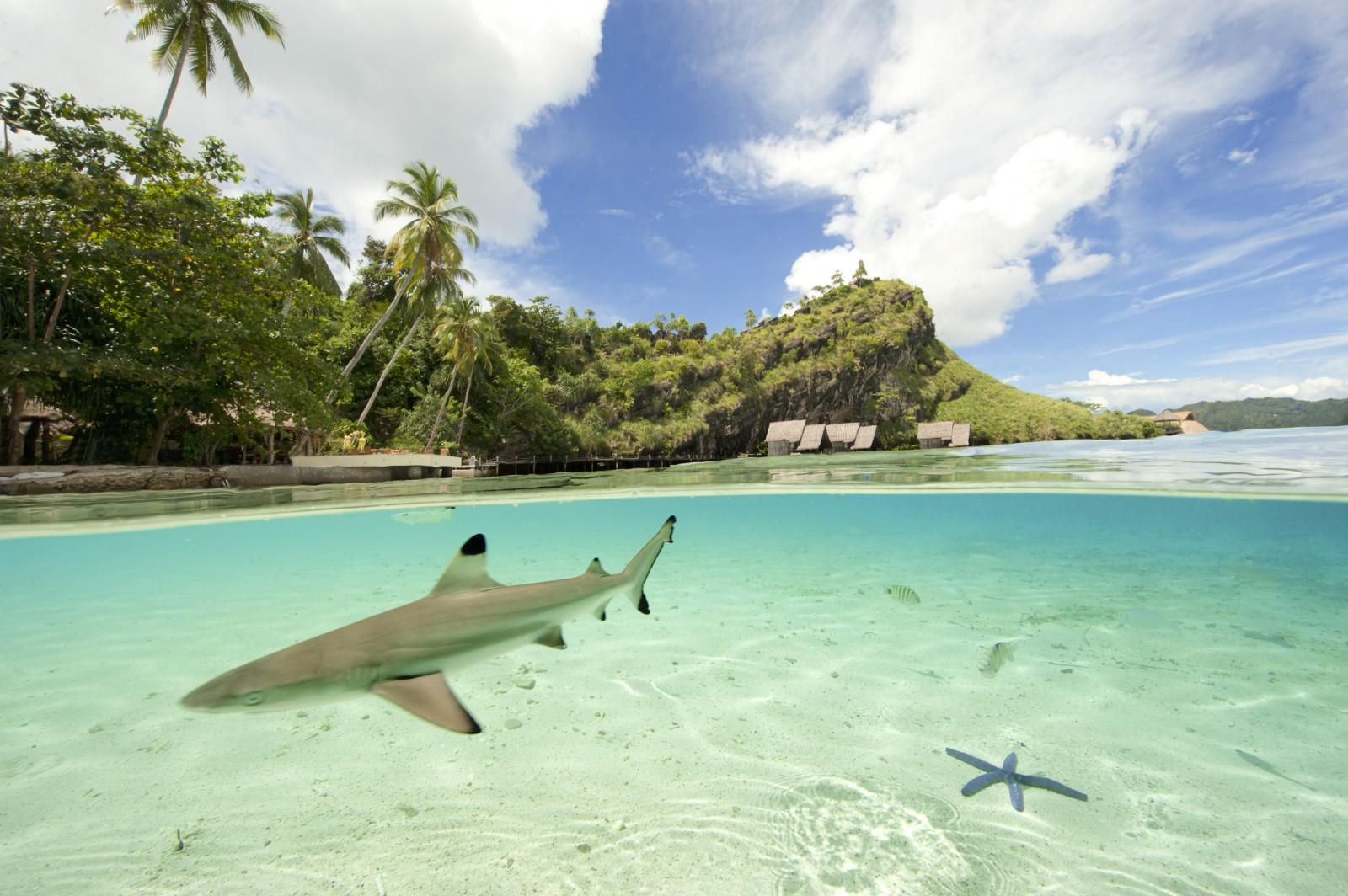 shark_in_misool_eco_resort