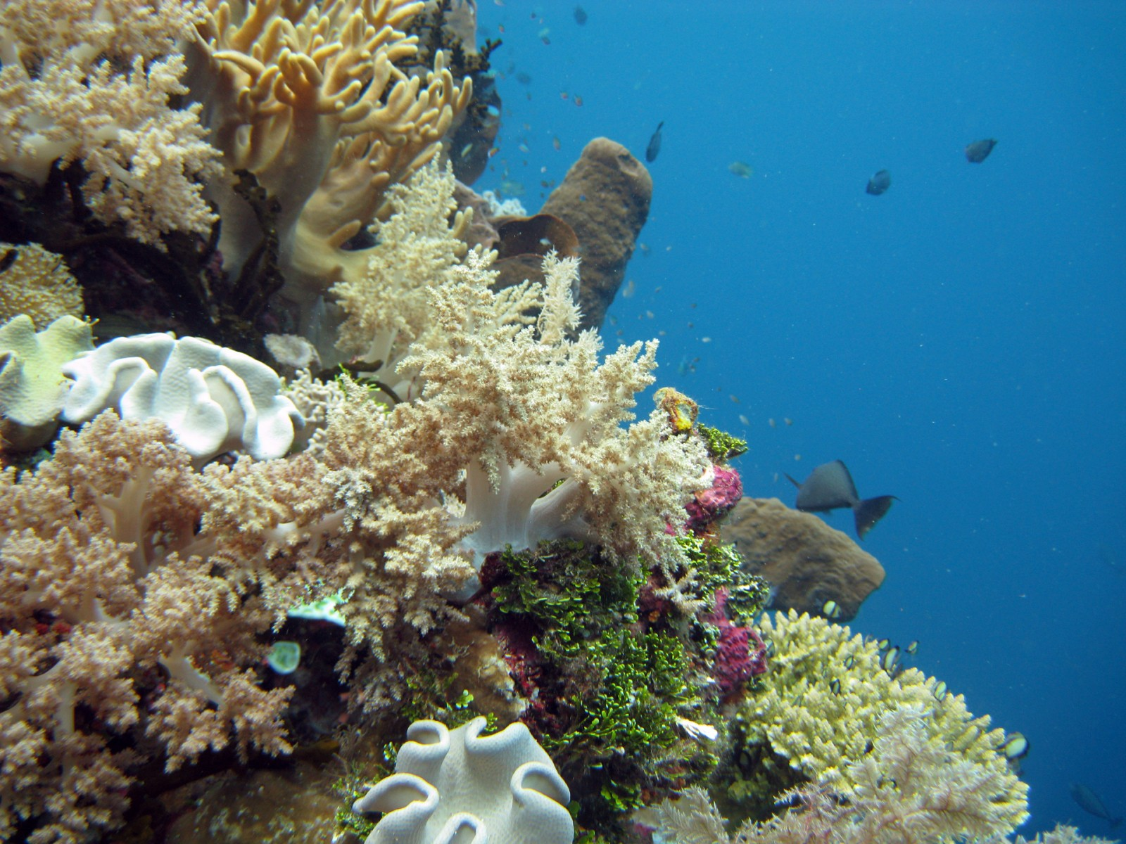 coral_wakatobi_dive_resort