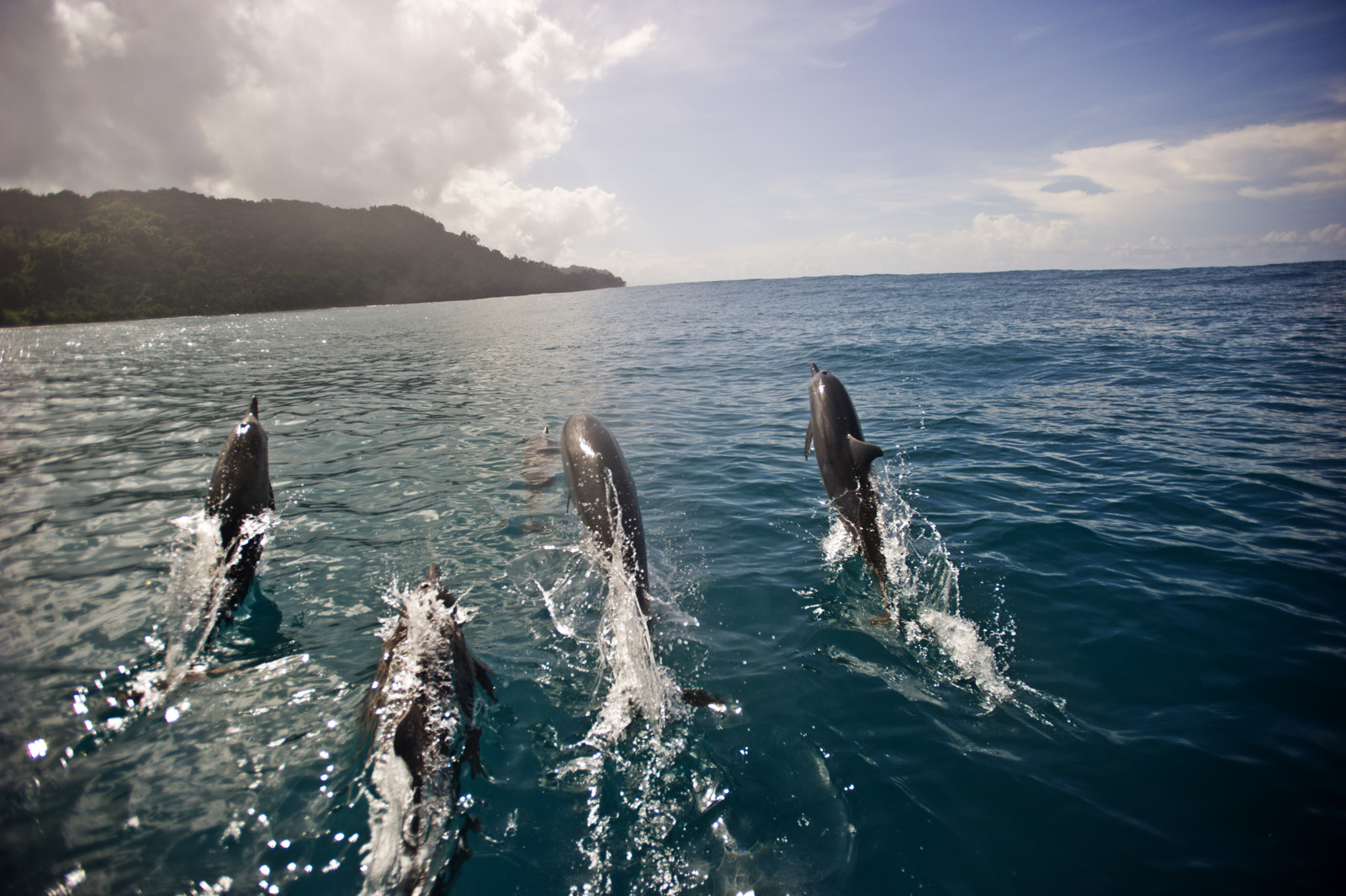 Spinner Dolphins play off the coast of Tetepare