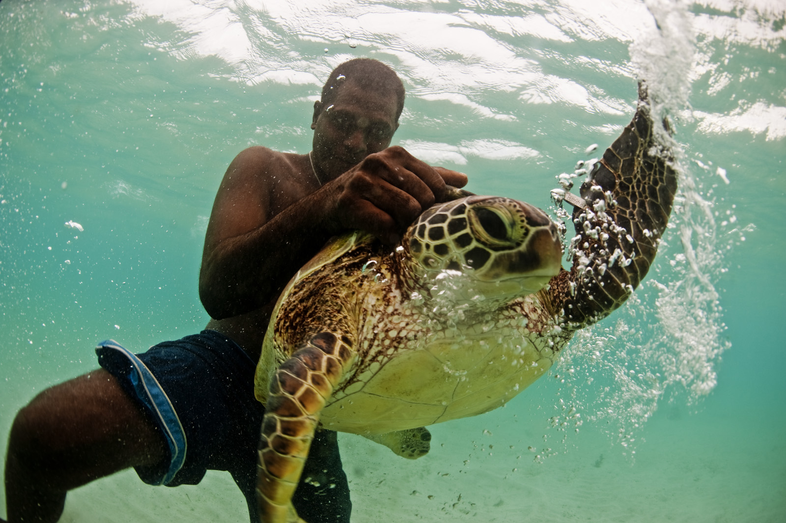 Turtles are tagged off the coast of Tetepare