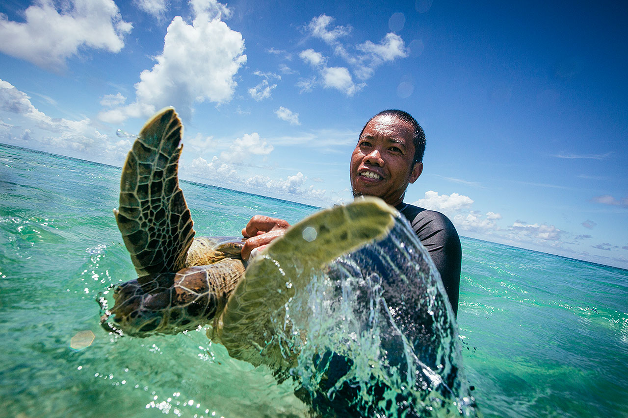 capturing a green turtle for tagging