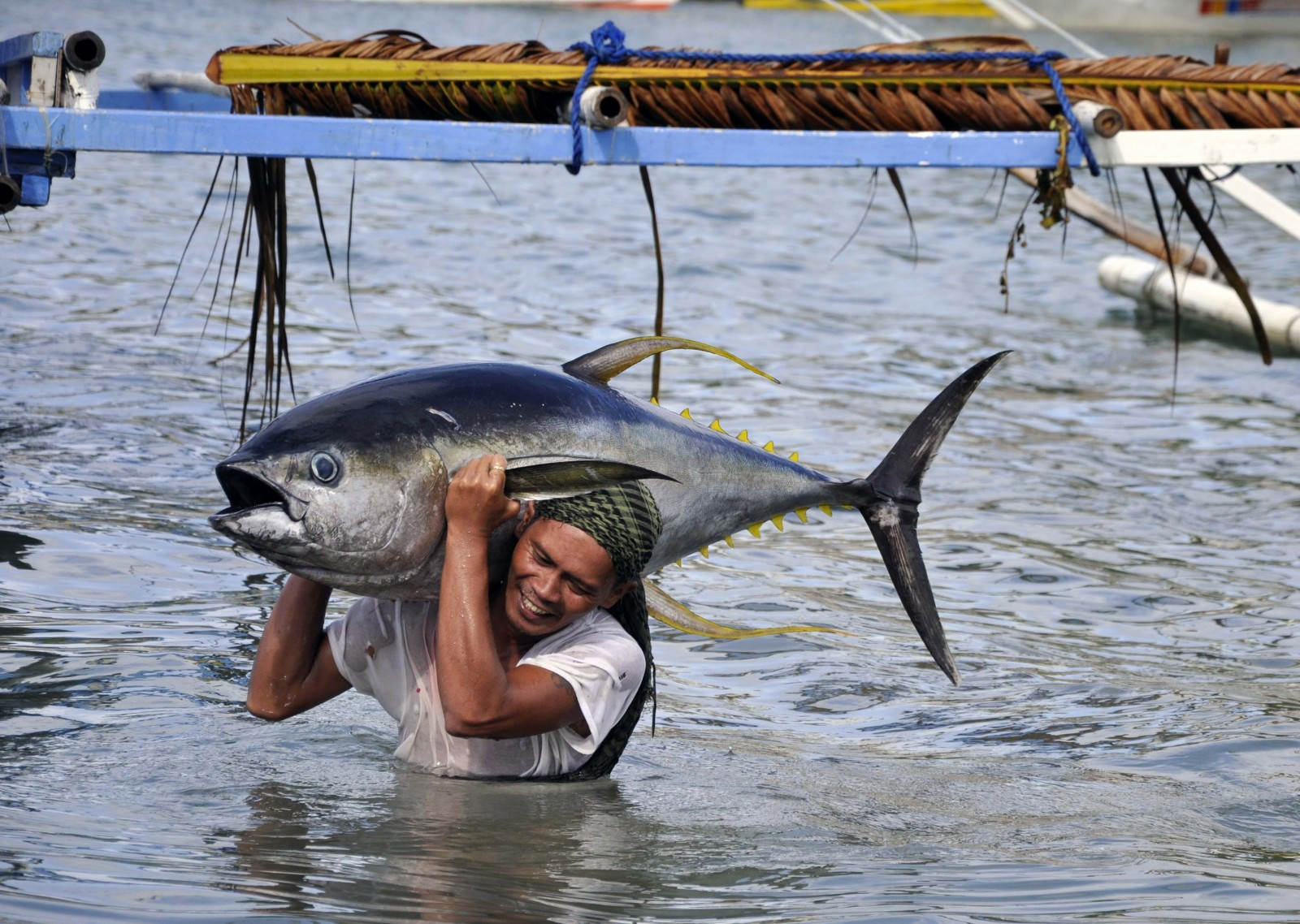 tuna-story-images-fisherman-with-tuna-by-gregg-yan-for-wwf.jpg
