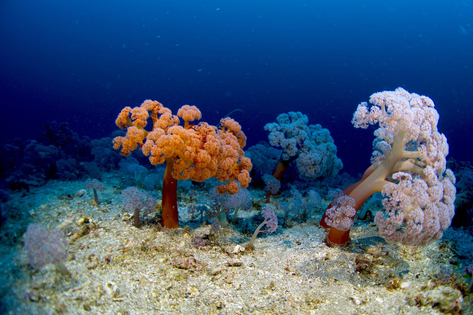 twin_rocks_coral_garden_shepherd.jpg