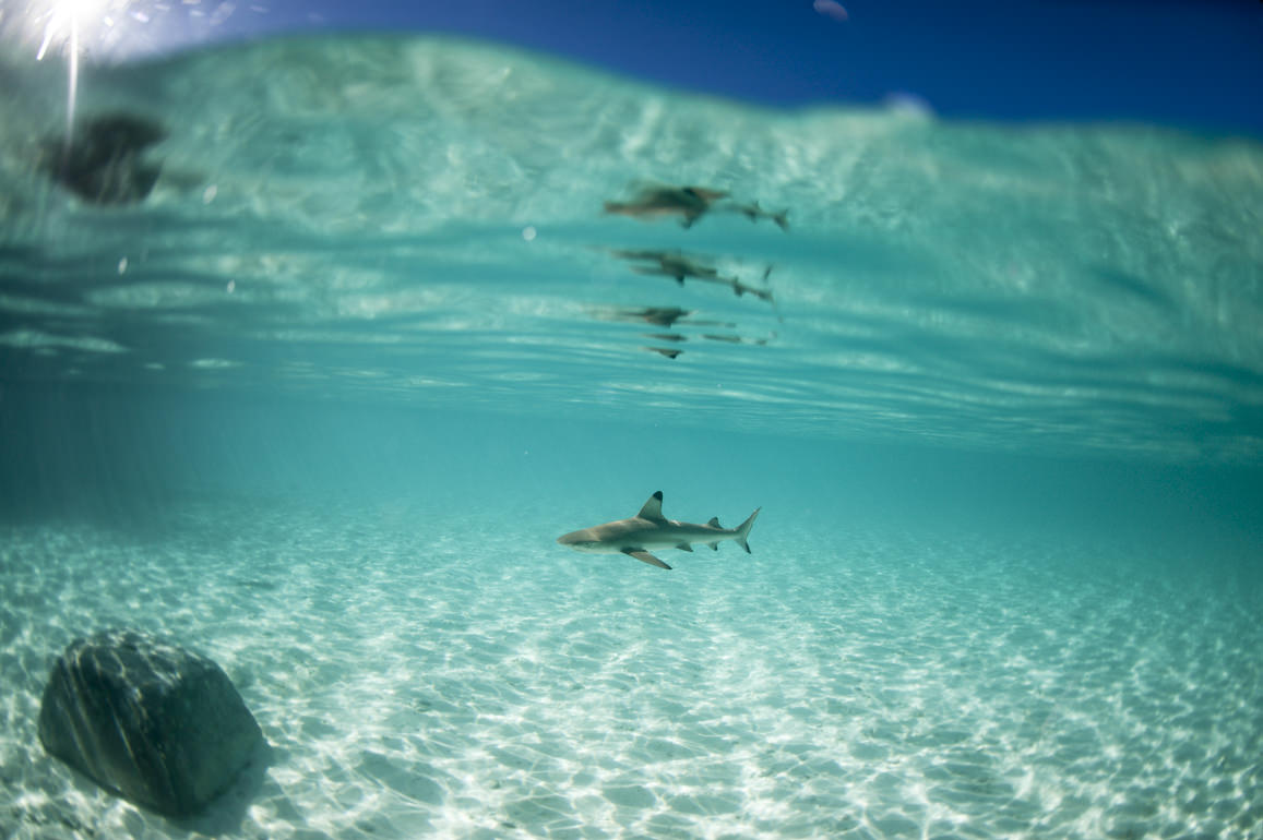 A baby shark at Misool Eco Resort