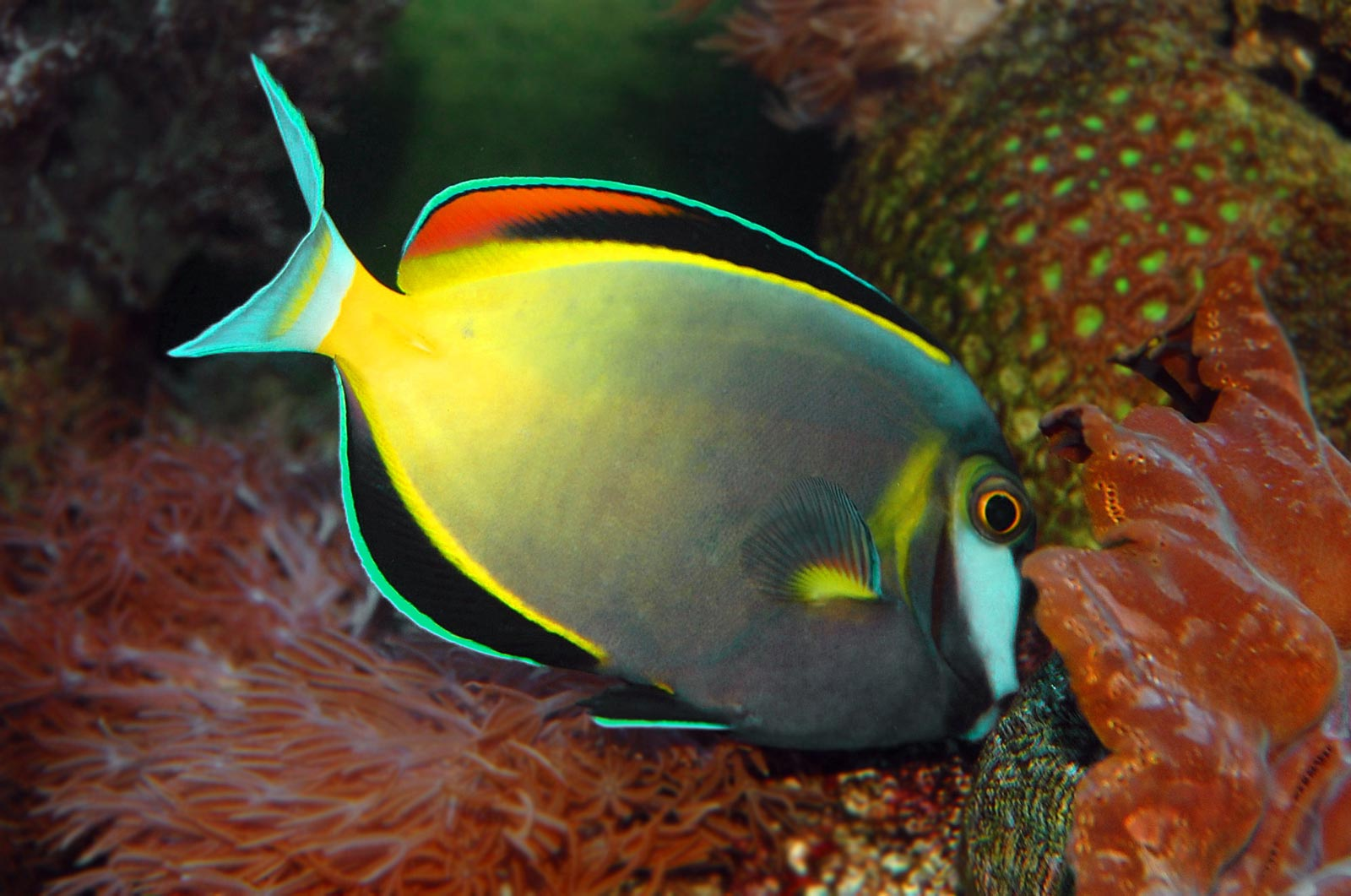 The recovery of tubbataha reef stories the coral triangle for Kumak s fish