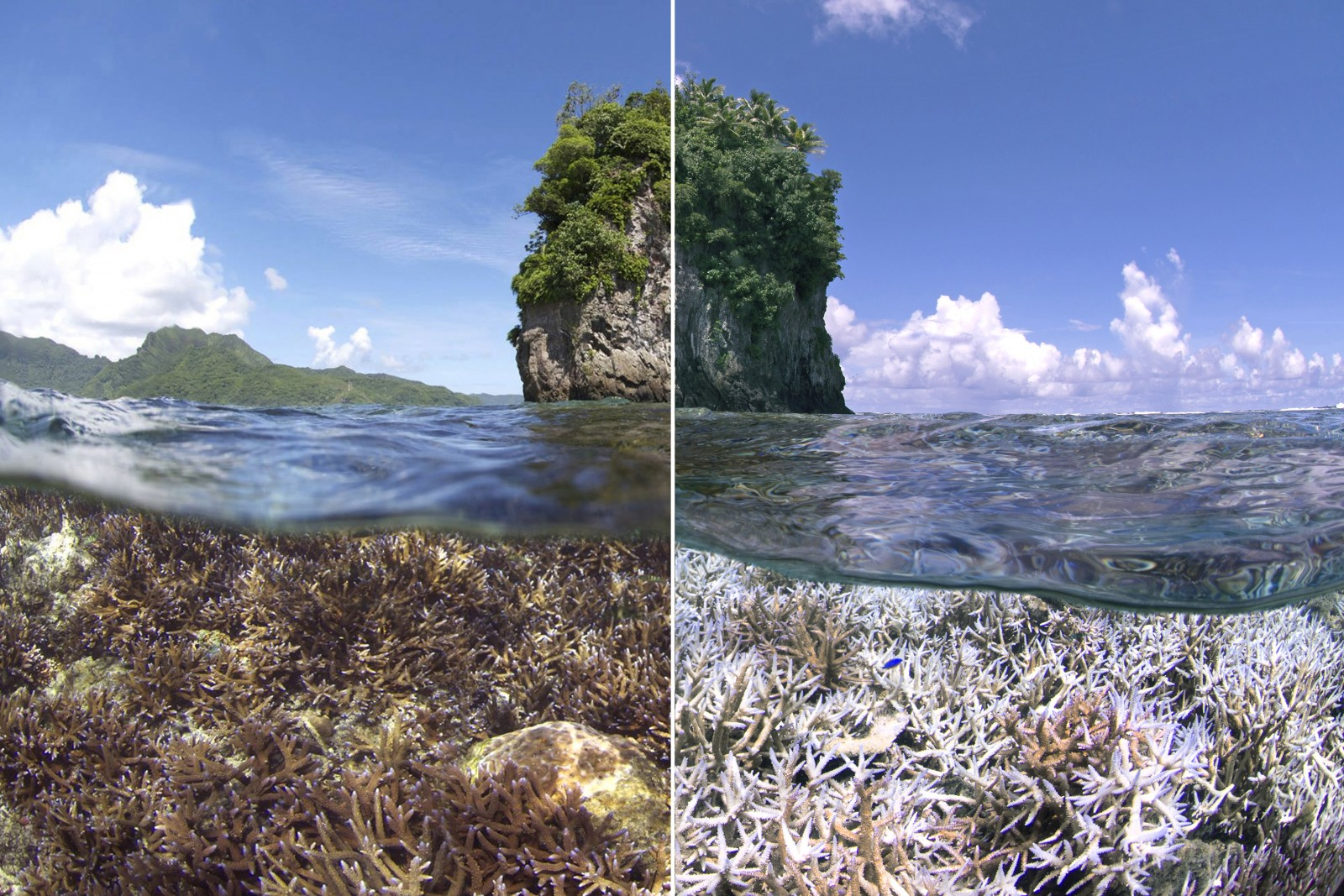 Bleaching in American Samoa during the last El Niño