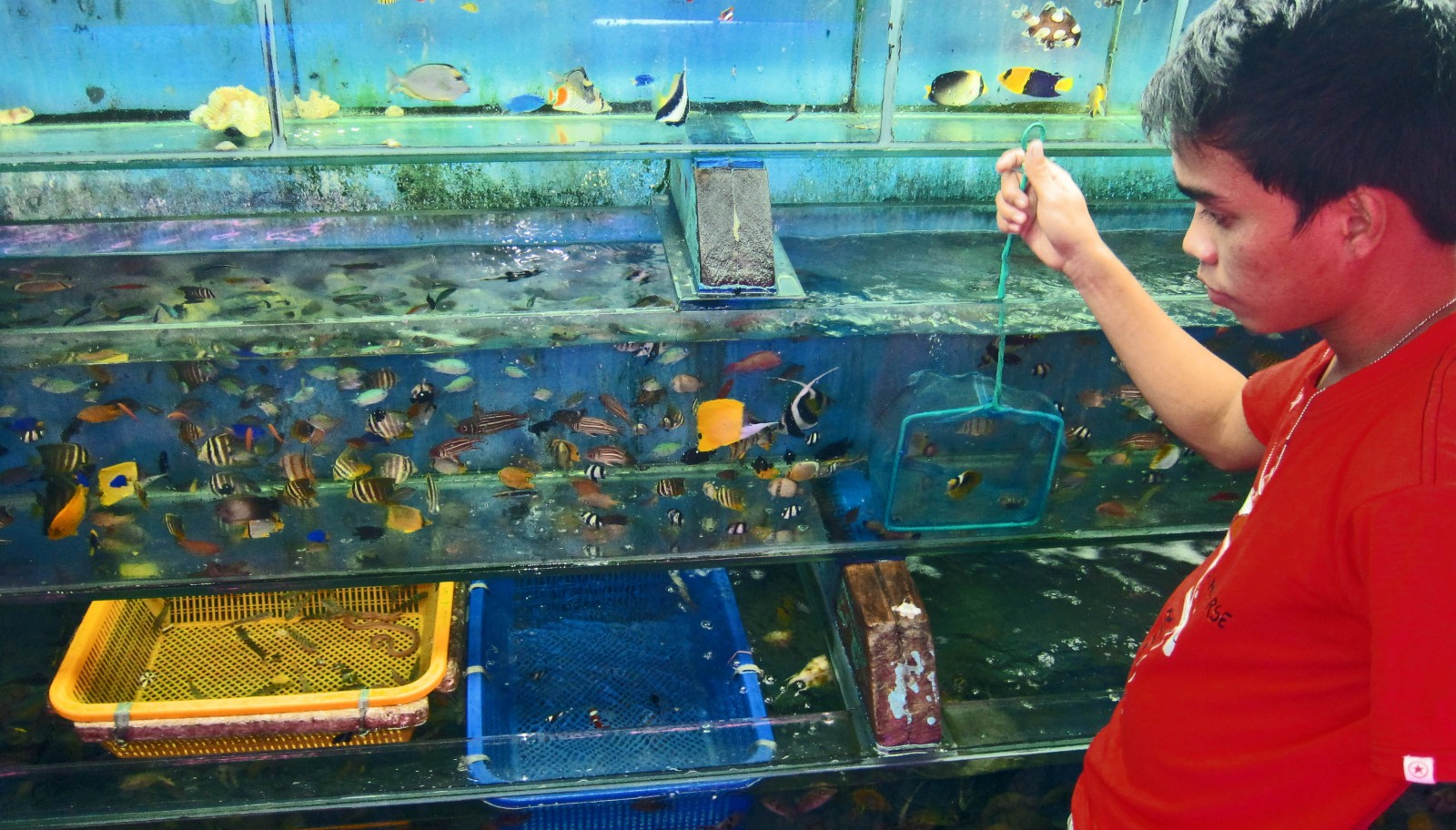 Could Big Data Make The Aquarium Trade Sustainable Stories The Coral Triangle